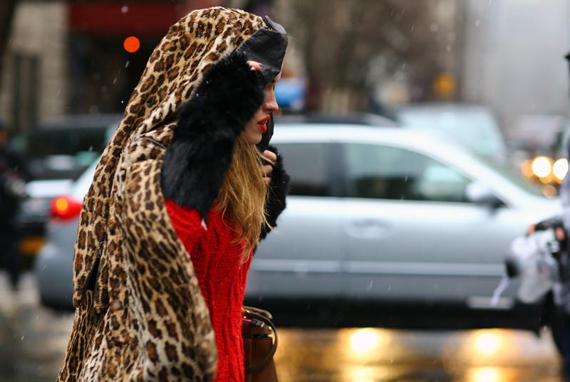 cheetah-cold.jpg